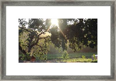 Cali Lite Framed Print by Shawn Marlow