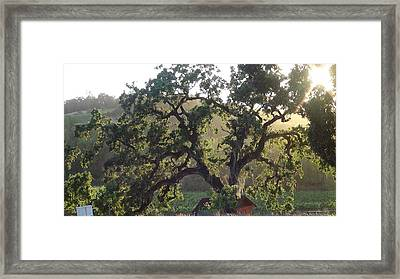 Cali Setting Framed Print by Shawn Marlow