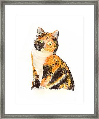 Calico Arabella Framed Print