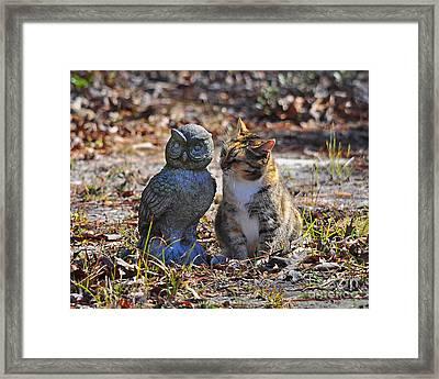 Calico Cat And Obtuse Owl Framed Print