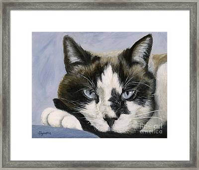 Calico Cat With Attitude Framed Print