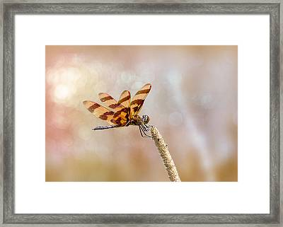 Calico Pennant Framed Print