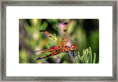 Calico Pennant Framed Print by Rob Sellers