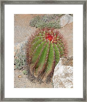 California Beauty Framed Print by Christine Till