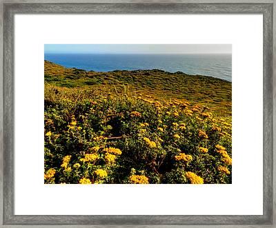 California - Big Sur 007 Framed Print