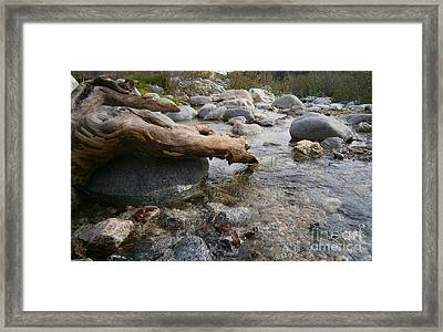 California Canyon 20 Framed Print by Drew Shourd