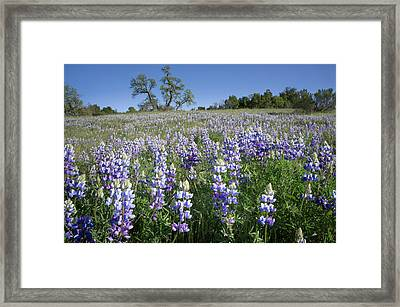 California Central Coast Framed Print by Rob Sheppard