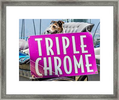 California Chrome Fans  Framed Print by Pamela Schreckengost