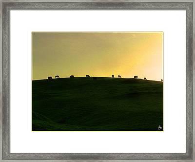 California Coast Cows At Sunset Framed Print by Wayne King