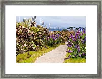 California Coastline Path Framed Print by Melinda Ledsome