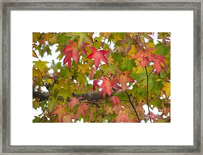 California Color Framed Print by Deborah Smolinske