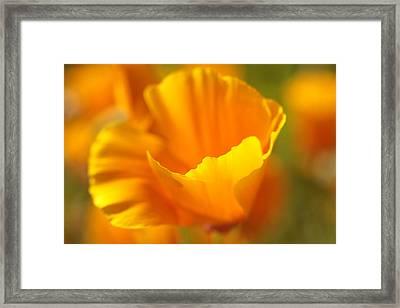 California Dreamin' Framed Print by Connie Handscomb