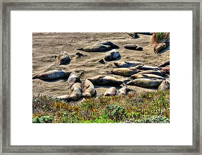 Framed Print featuring the photograph California Dreaming by Jim Carrell
