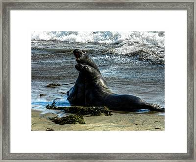 California - Elephant Seals Of Big Sur 006 Framed Print by Lance Vaughn