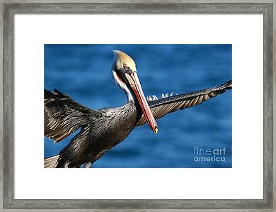 Freedom In Blue Framed Print