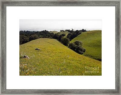 California Gold Framed Print by Juan Romagosa