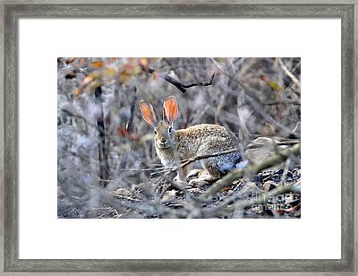 Homeless Hare Framed Print