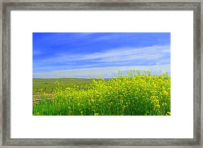 California In Spring Framed Print by Rima Biswas