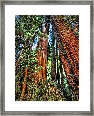 California - Muir Woods 001 Framed Print