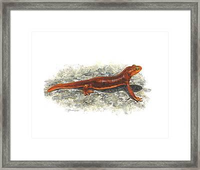 California Newt Framed Print