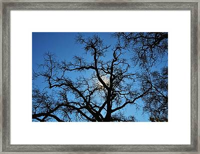 California Oak Sun Tree Framed Print
