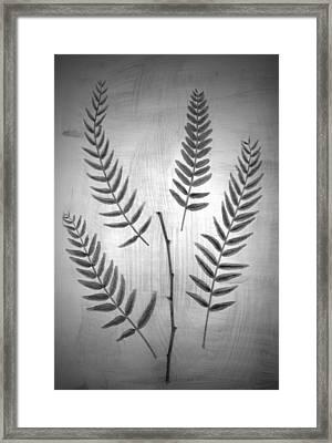 California Pepper Framed Print by Mark Ross