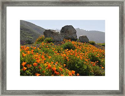 Framed Print featuring the photograph California Poppies by Lynn Bauer