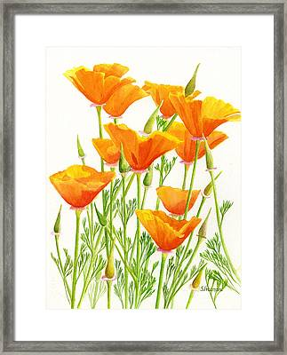 California Poppies Framed Print by Sharon Freeman