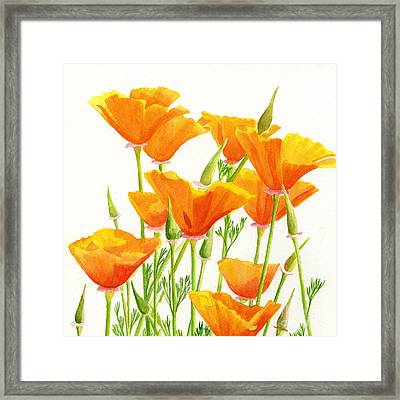 California Poppies Square Design Framed Print by Sharon Freeman