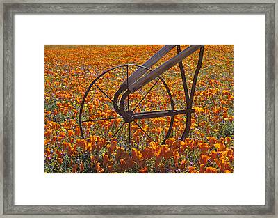 California Poppy Field Framed Print