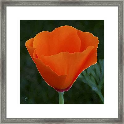 California Poppy Spectacular Framed Print