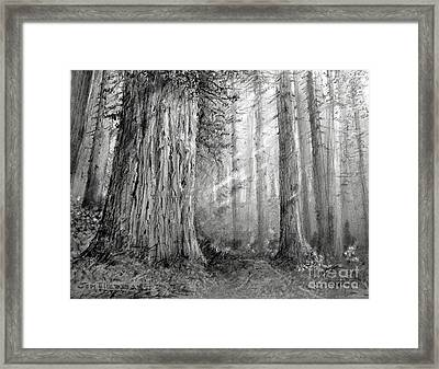 California Redwood Framed Print