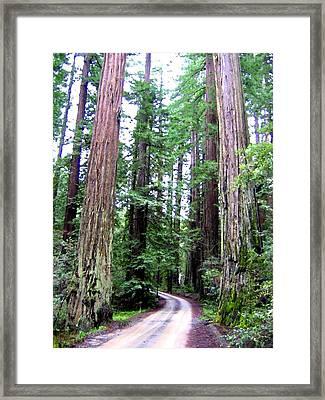 California Redwoods 1 Framed Print by Will Borden