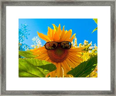 California Sunflower Framed Print by Bill Gallagher