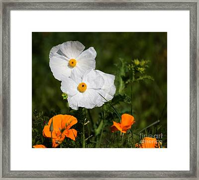 California Tree Poppies With Golden Poppies In A Meadow Framed Print