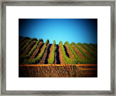 California Vineyard Framed Print by Joyce Kimble Smith