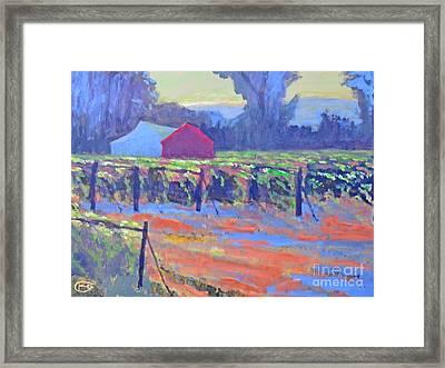 California Vineyard Framed Print by Kip Decker