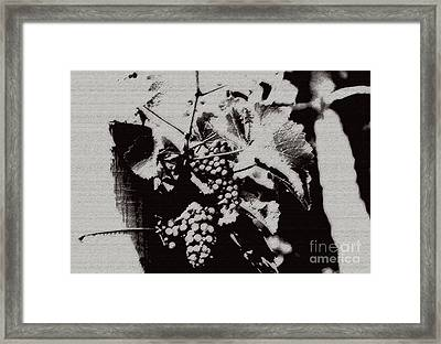 California Vineyard Framed Print by Linda Shafer