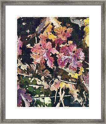 California Vineyard Series Fall Grape Leaves Framed Print