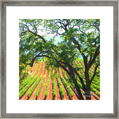 California Vineyard Wine Country 5d24519 Square Framed Print by Wingsdomain Art and Photography