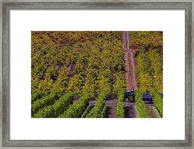 California Vineyards Framed Print by Garry Gay