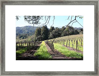 California Vineyards In Late Winter Just Before The Bloom 5d22053 Framed Print
