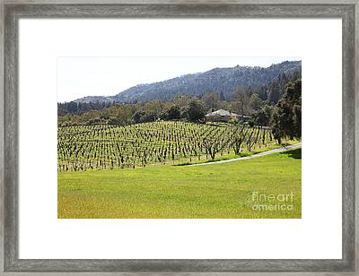California Vineyards In Late Winter Just Before The Bloom 5d22073 Framed Print