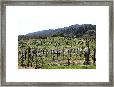 California Vineyards In Late Winter Just Before The Bloom 5d22088 Framed Print