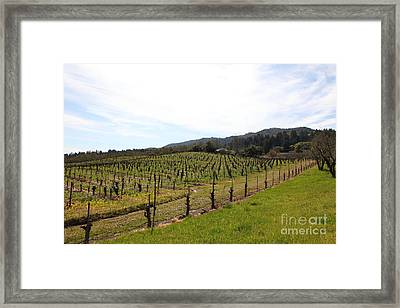 California Vineyards In Late Winter Just Before The Bloom 5d22114 Framed Print