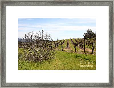 California Vineyards In Late Winter Just Before The Bloom 5d22121 Framed Print