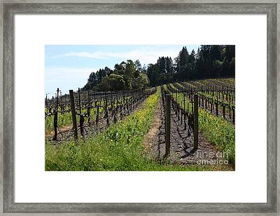California Vineyards In Late Winter Just Before The Bloom 5d22166 Framed Print
