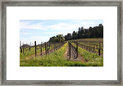 California Vineyards In Late Winter Just Before The Bloom 5d22167 Framed Print by Wingsdomain Art and Photography