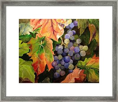 California Vineyards Framed Print