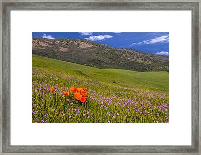California Wildflowers Framed Print